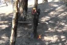 5 мая выдалось урожайным на пожары
