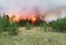 На Южном Урале объявили особый противопожарный режим