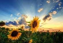 Народный праздник Тихон Страстной отмечается 26 августа 2021 года