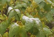 В Карталах снег пошел